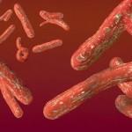 """Ebola: scatta il """"codice rosso"""" negli scali europei"""
